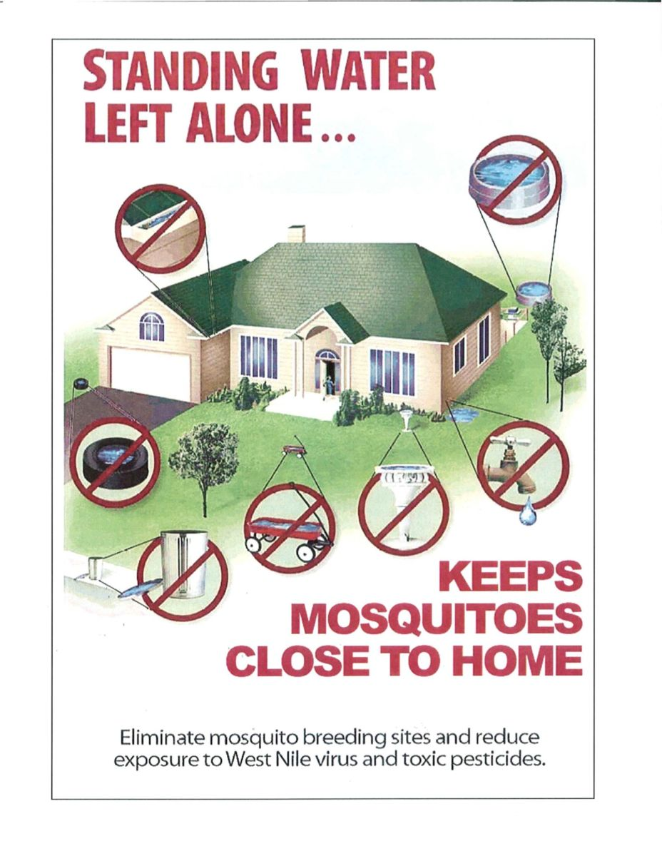 Standing Water Left Alone Keeps Mosquitoes Close to Home (JPG)